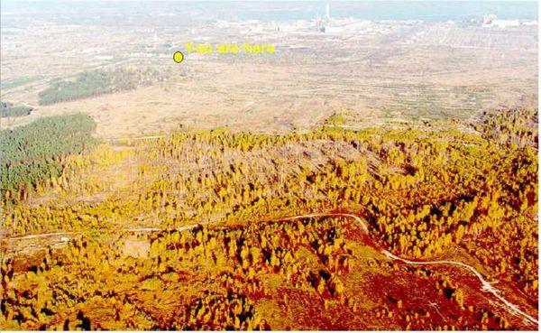 Pripyat-bosco