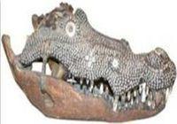 Coccodrillo-teschio