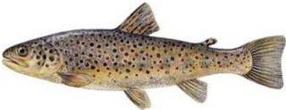 Trota-pesce