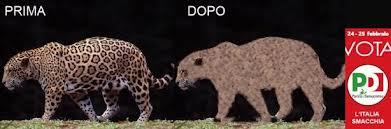 Giaguaro-prima-dopo